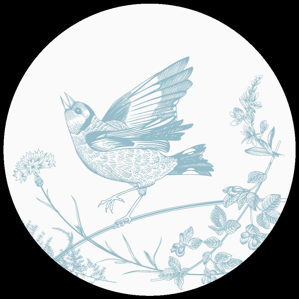 Classic bird illustration.